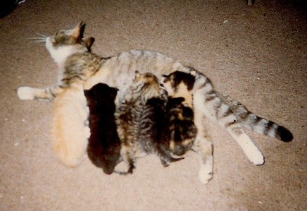 tinnef mit babys