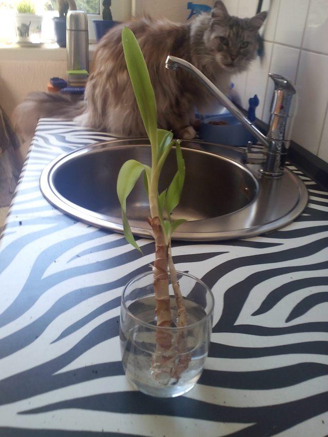 Yuccafucca